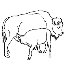b u0026w clipart cow pencil and in color b u0026w clipart cow