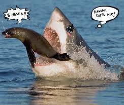 Shark Meme - seal tsundere sharks know your meme