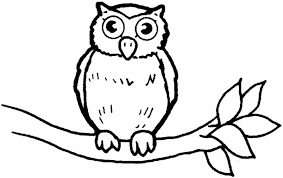 Owl Coloring Pages Bebo Pandco Owl Color Pages