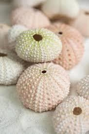 shells sand