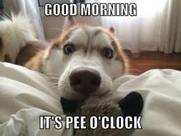 Good Morning Meme Pics - funny good morning meme cute and beautiful pictures for him her
