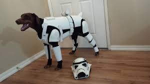 doberman u0027star wars u0027 costume turns pincher into stoormtrooper