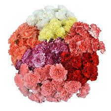 carnations in bulk bulk fresh flowers ebay