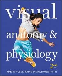 Anatomy And Physiology Pdf Free Download Visual Anatomy U0026 Physiology 2nd Edition Pdf Anatomy Medical And