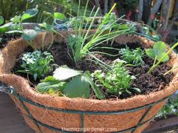 17 water saving tips for container gardens the micro gardener