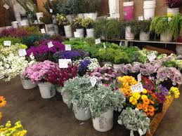 flower wholesale wholesale flowers jillsuzannedesign