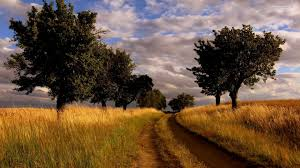 summer country road wallpaper
