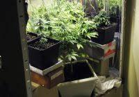 chambre de culture cannabis complete chambre de culture cannabis complete 100 images chambre de