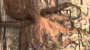 tree octopus camouflage
