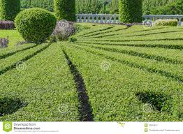landscaping trees royalty free stock photography image 32919617