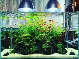 Aquascape Online 432 Best Aquascaping Images On Pinterest Aquascaping Aquarium