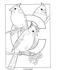 free coloring pages of birds free coloring pages alphabet c is for cardinal birds alphabet