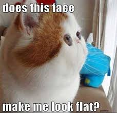 Fat Cat Meme - does this face make me look fat cat memes and comics