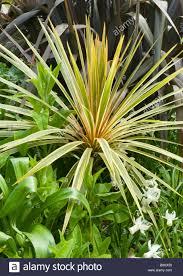 Tropische Pflanzen Im Garten Tropische Pflanzen Wachsen In Den Gärten In Der Nähe Von