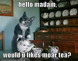 Madam Meme - hello madam would u likes moar tea cat teas and cat lady