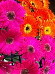 bright colors archives freytags florist