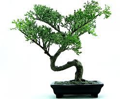 random tree generator on fpga