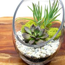 new layered succulent terrariums eastern leaf knowledge base