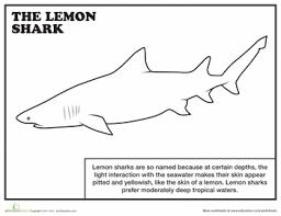 sharks coloring pages lemon shark coloring page shark worksheets and summer