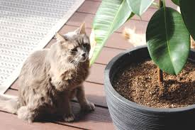 the best pet friendly plants for your home seattle seed company