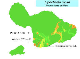 Hawaii Lava Flow Map Botanical Resources On A A Flow At Wailea 670