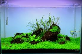 japanese aquascape maintenance aquascape ada 60 p