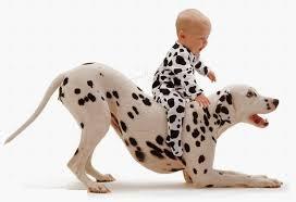 dalmatian dog wallpapers good hdq live dalmatian dog pics
