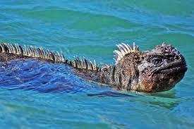 iguana island galápagos islands attractions and landmarks wondermondo