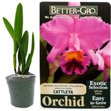 orchid indoor plants garden plants u0026 flowers the home depot