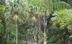 Kona Botanical Gardens Seymour Botanical Gardens Kona Reef Condo D 26
