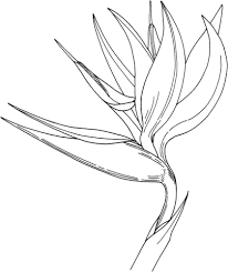 bird of paradise flower bird of paradise flower coloring page free printable coloring pages