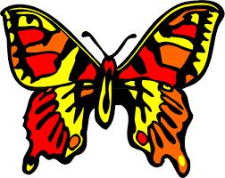 news butterfly july 2013