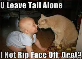 Memes Without Captions - chuck s fun page 2 hey hey hey it s caturday 15 pics