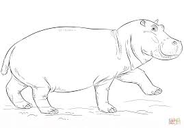 cute hippo coloring page free printable coloring pages