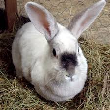 can i compost rabbit droppings u0026 bedding can i compost this
