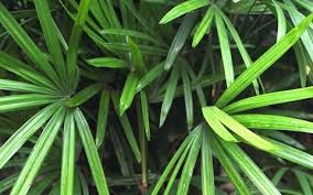 Best Plants For Bedroom The Best Houseplants To Clean The Air In Your Home As Recommended