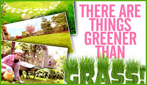 Grassless Backyard Ideas 8 Beautiful Ideas For A Unique Yet Attractive Grassless Front Yard