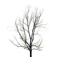 image of tree without leaves marcia richards
