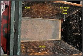 How To Build Top Bar Hive Screen Floor Tbhs U2013 200 Top Bar Hives The Low Cost Sustainable Way
