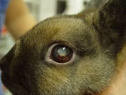 parasites of rabbits chicago exotics animal hospital