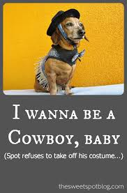 Halloween Costumes Miniature Dachshunds Dog Costume Fashion Show Dachshunds Halloween Costumes Cowboys