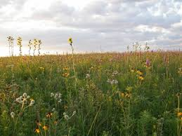 illinois native plant guide prairies forest preserves of cook county