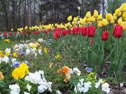 uncategorized you plant fall bulbs enjoy carefree flowers in