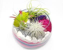air plant terrarium in glass rose bowl sand art franklin events
