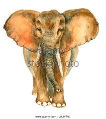 elephant tusk art stock photos u0026 elephant tusk art stock images