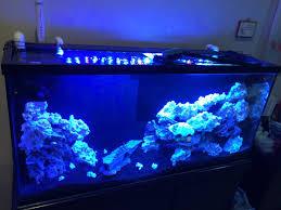 Refugium Light My 85 Gal Reef Tank Reef2reef Saltwater And Reef Aquarium Forum
