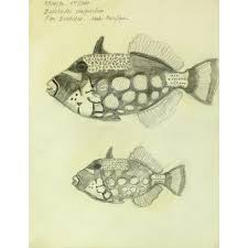 drawing clown triggerfish original art antique maps u0026 prints