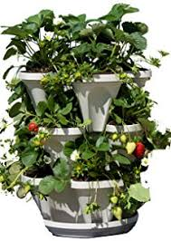 amazon com living whole foods k5 1 indoor culinary herb garden