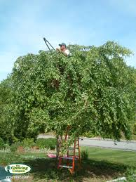 arboriculture services for cotuit osterville chatham orleans