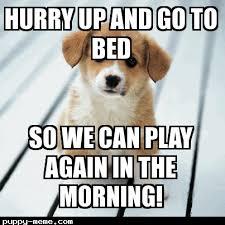Cute Puppy Meme - cute puppy puppies pinterest animal